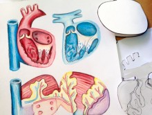 cardiac anatomy paper model michiko maruyama