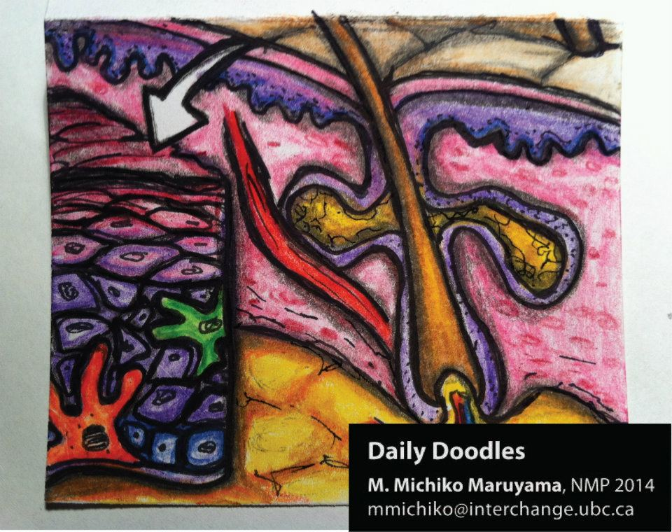 Skin Physiology Daily Doodle by Michiko Maruyama