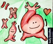 heart embrology michiko maruyama